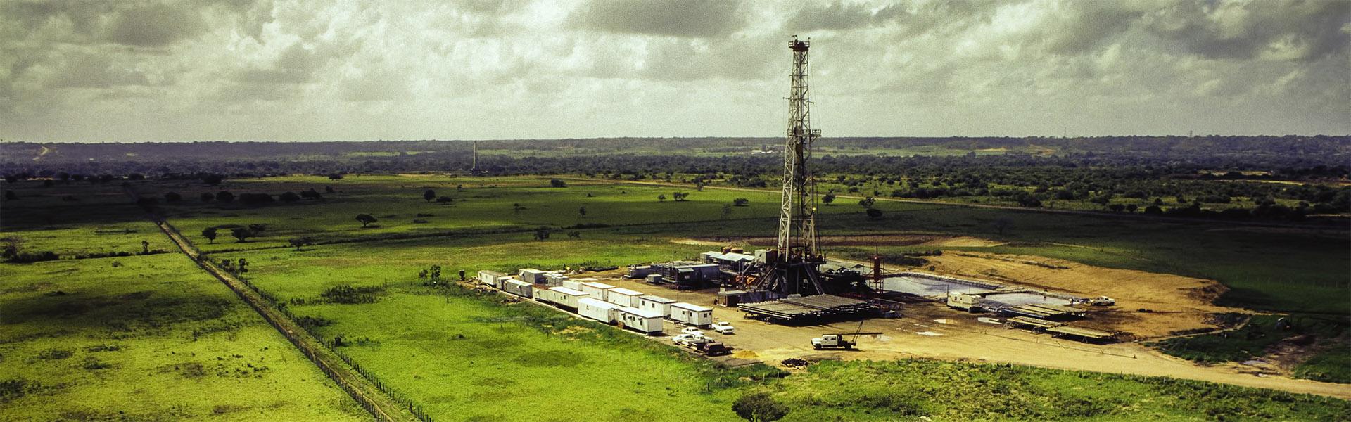 Hamilton Squibb oil image